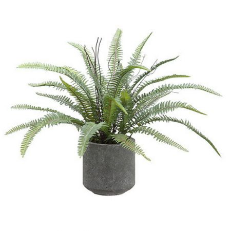 Potted Green Sword Fern