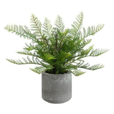 Potted Green Lace Fern